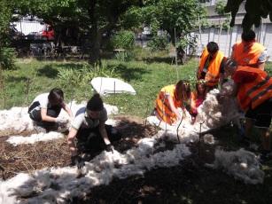 Pacciamatura con lana di pecora